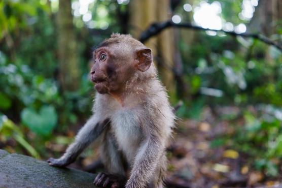 Alert Baby Monkey