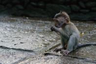 Baby Monk Monk